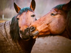 horses-1124115